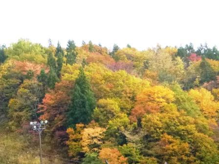 (ブログ写真1)紅葉 山 P1080410