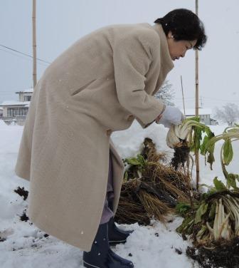 01 雪の中の雪菜